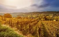 Új bortörvény készül