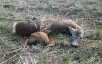 A vadgazdálkodás eredményeit is visszaveti a járvány