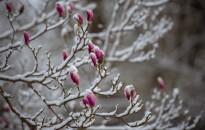 A hét képe –Tél a tavaszban