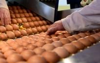 Húsvét - A koronavírus nem veszélyezteti a tojásellátási-láncot