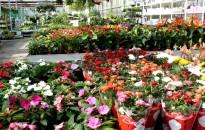 Hatalmasat zuhant a hazai dísznövénypiac