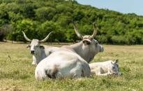 Majorságot épít a Balaton-felvidéki Nemzeti Park a Mura mellett