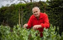 Ásó, kapa, gereblye: Csalánlé a bio kertészet jegyében – egyenes vonalak mentén