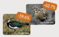 Csökken a magyarországi madárállomány