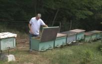 Kipörgették a méhészek az idei év akác termését