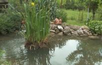 Hangulatos tavakkal színesíthetjük kertünket