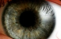 A kígyók hőlátó képessége segítheti a retina gyógyítását