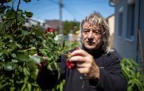 Ásó, kapa gereblye: Nincsen rózsa tövis nélkül – nincsen kiskert rózsa nélkül