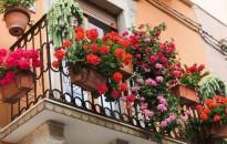 Meghosszabbították a Virágos balkonok, virágos kertek verseny nevezési határidejét