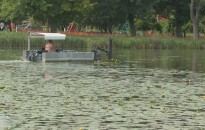 Kivágják az elburjánzott vízitököt a Csónakázó-tóból