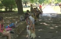 Állatvédelmi tábor a menhely kutyáival