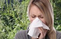 Idén nyáron magas lesz a parlagfű pollenkoncentrációja