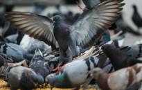 A természeti környezet átalakítása a betegségeket terjesztő állatoknak kedvez egy új kutatás szerint
