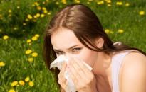 Pollenhelyzet - Magas, néhol nagyon magas a parlagfűpollen koncentrációja