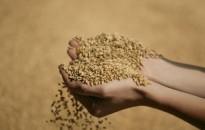 Zala megyében kiemelkedően magas a búza termésátlaga