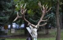 Országos vadásznap – Vadászati képzőművészeti tárlat nyílik Zalaegerszegen