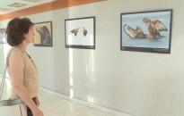 Természetfotós kiállítás nyílt a Magyar Fotográfia Napja alkalmából