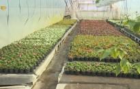 Négy új pályázati felhívást hirdet meg a Nemzeti Agrárgazdasági Kamara