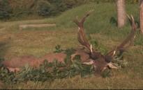 Kapitális bikát lőttek a Hubertus Vadásztársaság területén