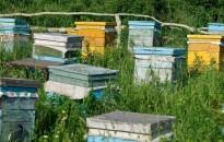 Nem lehetnek nyugodtak a méhészek: már a méhkaptárakat is lopják