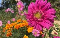 Ásó kapa… –  Stresszoldás Rigóhegyen - virágokkal, szomszédokkal