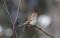A madarak éneke is megváltozott a karantén alatt