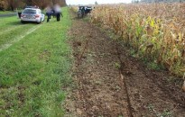 Hintóval elszabadult lovak okoztak balesetet Keszthelyen