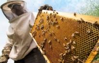 Az idei gyengébb termelés ellenére is lesz elég méz a belföldi fogyasztásra