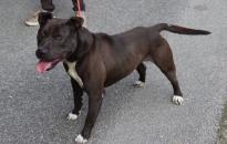 Megtalálták Raptort – Menhelyről lopott kutyát egy tizenhét éves lány