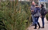 Zala és Somogy látja el karácsonyra fenyővel a fővárost