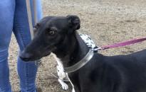 Állatkínzás miatt elítéltek egy nőt, aki nem gondoskodott megfelelően kutyájáról