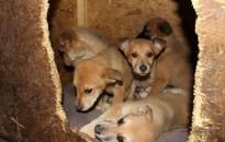 Ki tud róluk? Információt vár a menhely egy kutyacsaládról!