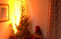 Veszélyessé válhatnak a kiszáradt karácsonyfák