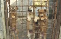 Állatmenhely: Tápra, pokrócra lenne szükség