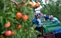 Február 14-én kezdődik a gyümölcsös ültetvények összeírása
