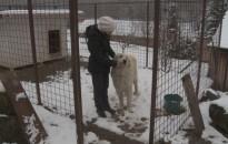 Orvvadászok által kihelyezett hurokba akadt két kutya is Kistolmácson