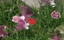 Virágot, kedvességet, figyelmességet és vért is adtak a férfiak a nőnapon
