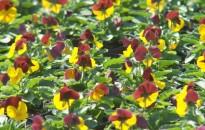 Virágba borulva – ősszel is