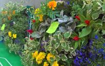 Virágosítás – Feliratkozás palántákra