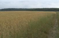 Most sincs nyugalom a mezőgazdaságban