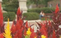 Idén is nevezett Kanizsa a Virágos Magyarország elnevezésű versenyre