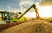 Megkezdődött a búza aratása Zala megyében