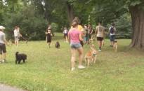 Idén is táboroznak az ifjú állatvédők