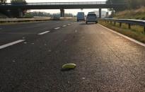 Halálos baleset történt az M7-es autópályán Balatonszentgyörgy térségében