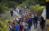 Szakértő: ahol sok a migráns, ott morális hanyatlást érez a lakosság