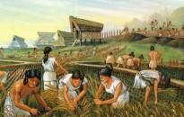 Alkalmazkodtak a klímaváltozáshoz az újkőkorszakban élt korai földművesek