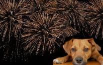 Állatvédők: sokkhatást okoz az állatoknál a tűzijáték