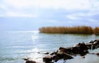 Milyen gyógyszerek vannak a Balatonban?
