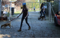 A kanizsai egyetemisták is szeretik az állatokat