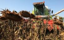 Több kukorica és napraforgó termett az idén Zala megyében